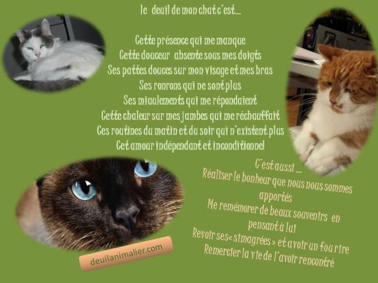 Citation deuil de mon chat Deuil Animalier Lynne Pion