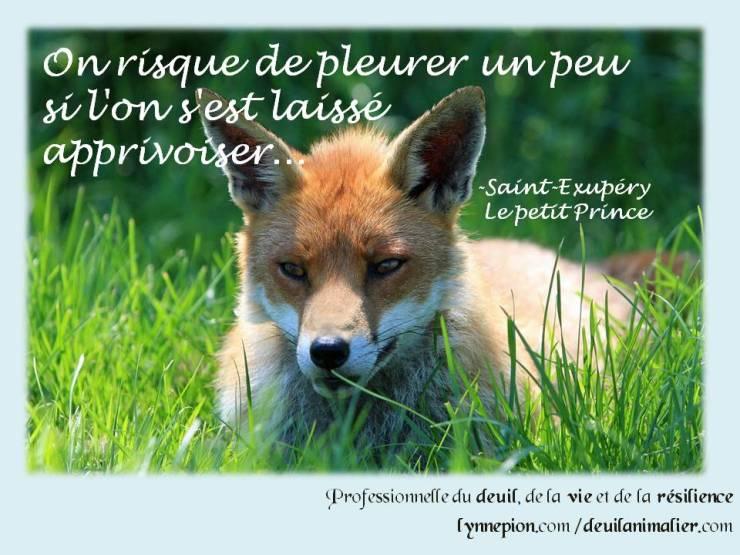Citations 2016 Petit Prince apprivoiser Lynne Pion