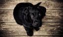 photo chien DeuilAnimalier Lynne Pion
