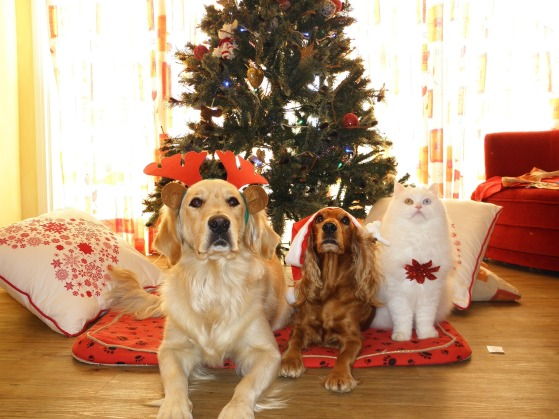 deuil animalier décembre Noël Lynne Pion Deuil-Vie-Résilience