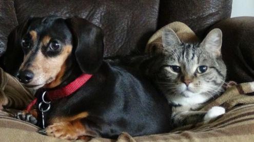 Lucky et Mao 16 09 2015 Lynne Pion deuil animalier.JPG