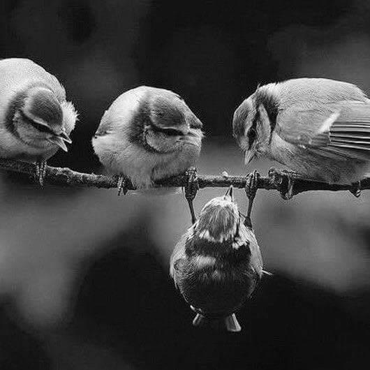 photo oiseaux accroches-toi