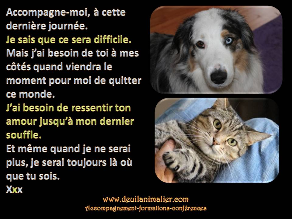 Deuil animalier Accompagne-moi Lynne Pion