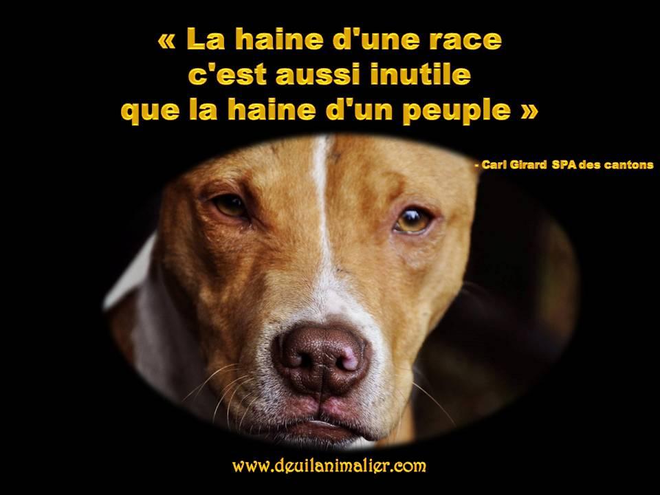 Deuil animalier haine d'une race, haine d'un peuple aussi inutile